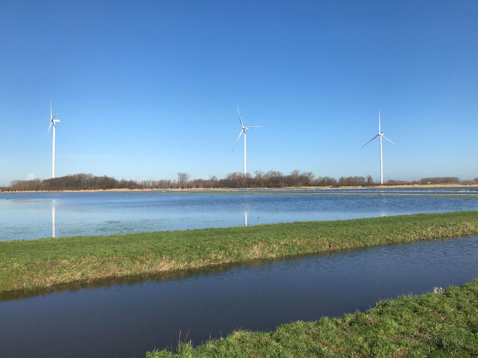 Nieuwe Plasdras Windpark Deil Paradijs Voor Trekvogels